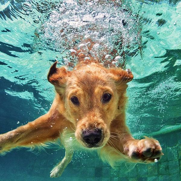 A dog under water.